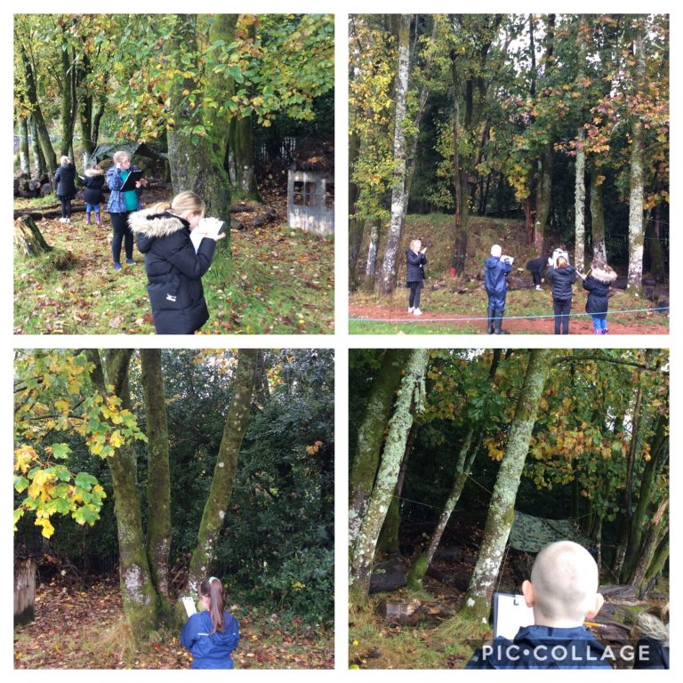 P5/6 Studying their favourite tree.